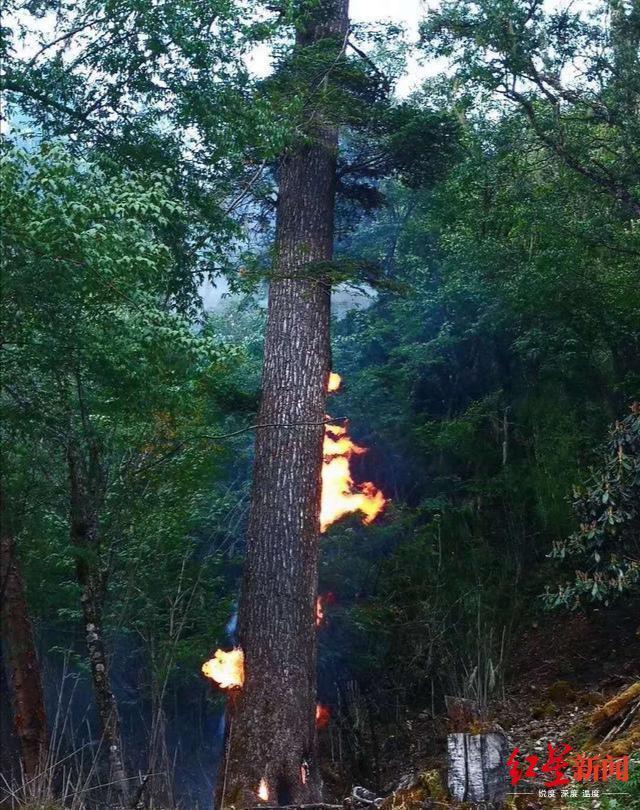 四川木里森林一棵树被雷击燃,幸被当地干部群及时扑灭